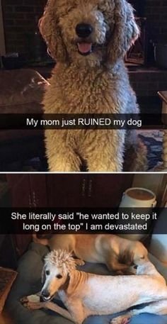 Afternoon Funny Memes 34 Pics