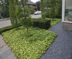 Sterke, vaste bodembedekkers kopen voor de tuin tegen de beste prijs. - Maréchal