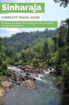 Sinharaja Rainforest: Trekking in Sri Lanka last rain forest Family Vacation Destinations, Travel Destinations, Asia Travel, Travel Usa, Travel Advice, Travel Guide, Ireland Travel, Galway Ireland, Cork Ireland