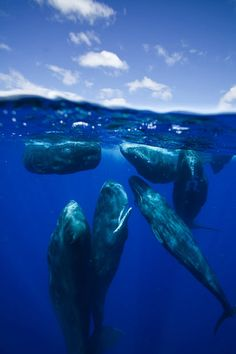 A group of whales near the surface of the water
