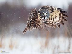 Take off.  This mesmerising pic via @pinterest