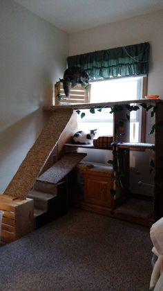 My DIM (Did It Myself) cat condo/dog lodge. Used a discarded entertainment center.Added extras I had around the house and carpet remnants. Total cost was less than $10.00!!! My cats and little dog love to lounge around and look out the window!! I can't believe it was so easy and much less expensive than buying one! I'm proud of myself!! 😀