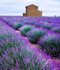 Standort, Pflege, Schnitt und ihn als Heilpflanze zum Trocknen ernten: So wächst Lavendel im eigenen Garten. Plus Deko- und Verwendungstipps.