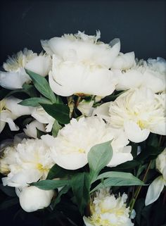 White Peonies #blooms #flowers