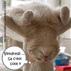 1000 images about bon vendredi on pinterest bonbon tes