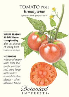 $1.89. Brandywine Tomato. 80 days. Winner of many taste tests, this pinkish/red, extra large tomato has earned its blue ribbon - fabulous flavor! Probably THE most famous heirloom tomato.