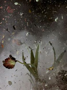 Ori Gersht Time after Time Dark Photography, Still Life Photography, Love Painting, Light Painting, Photo Shutter, Music Collage, Installation Art, Flower Art, Photo Art