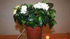 Spoznajte ich a vyskúšajte ich silu u vás doma. Feng Shui, Indoor Plants, Aloe Vera, Projects To Try, Gardening, Health, Diy, Bamboo, Inside Plants