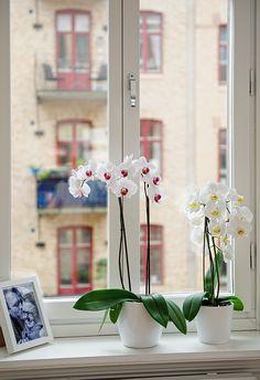 repisa en la ventana con orquídeas