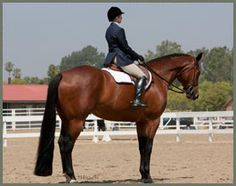 A Burning Romance. 17.2HH Keegan Quarter Horses, Champions owned by Nancy Keegan