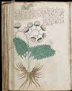 the voynich manuscript decoded - Bing Images