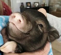 I'm in love with this piggy. Who wouldn't love this cute little face?