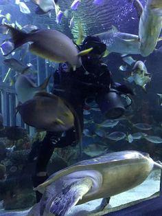 Malaysia Truly Asia, Fish, Pets, Animals, Animaux, Animal, Animales, Ichthys, Animais