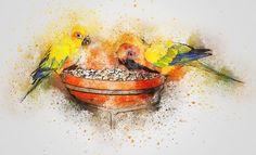 Parrot, Birds, Eating, Art