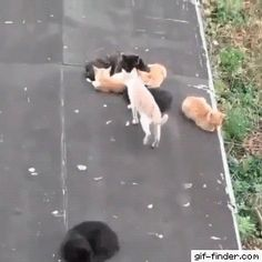 Cat doesn't give a shit