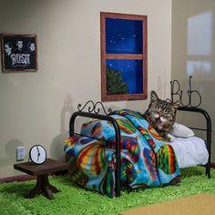 lil bub le chat le plus mignon du monde 13   Lil Bub le chat le plus mignon du net   star record du monde photo mignon Lil Bub image handica...