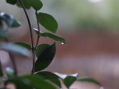 (c)rain