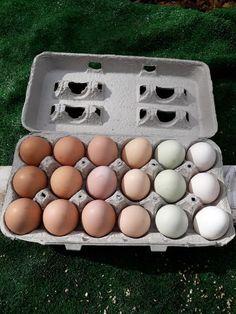 My Hen's Many Egg Colours-Trending Backyard Chickens Photo by @LisaRVeneziano