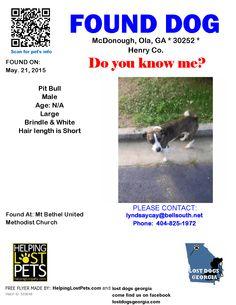 Found Dog - Pit Bull - McDonough, Ola, GA, United States