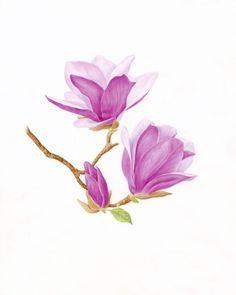 watercolor magnolia - Google Search
