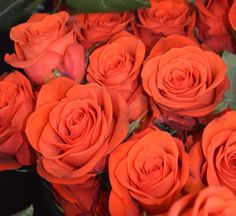 Santana Roses ~ love the smokey orange color and the lush petals that open fully! www.sendingsmiles.com
