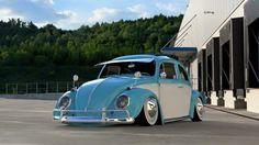 Two-toned Beetle