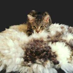 Cat Bed Cruelty Free Sheepfriendly Wool Fleece Felted by WraptCats
