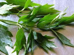 Home Remedies, Natural Remedies, Peta, Herbalism, Healing, Herbs, Vegetables, Floral, Beauty