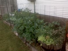 nice June Garden / http://www.everydaygardening.net/june-garden/