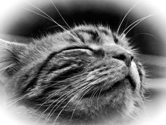 #Caturday(16)