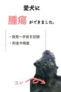 【写真あり】ちいさなデキモノ見逃さないで!愛犬を病気から守るために知っておこう『肥満細胞腫』とは?