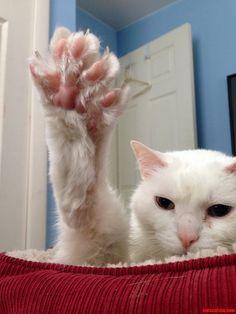 Louis wants a high five - http://cutecatshq.com/cats/louis-wants-a-high-five/