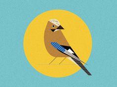Eurasian Bird — Illustration by Nicholas Hendrickx (ukaaa)