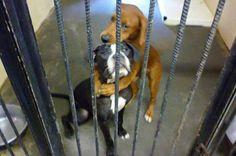 Os cães de resgate salvou de ser colocado para baixo por uma foto deles ABRAÇA - Daily Record