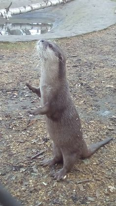 Mime Otter Is in an Invisible Box - It's a performance art piece representational of, and in protest to, otters around the world being in captivity.