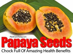 Papaya seeds are the part of the fruit most people throw out without a second thought. Amazingly, papaya seeds are not only consumable but are also good for one's health. They have been used to: Ward off parasites Improve liver health Get rid of some nasty bacteria The taste of papaya seeds might not be …