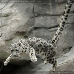 The Flying Cat 0282 by ~Sooper-Deviant on deviantART