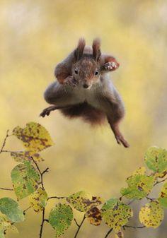 Super écureuil !!!!
