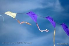 Espetáculos/Campeões do mundo em voo free style no 13.º FIPA
