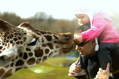 Bydlíme na Safari. Lemur, Czech Republic, Bowling, Giraffe, Safari, Animals, Felt Giraffe, Animales, Animaux