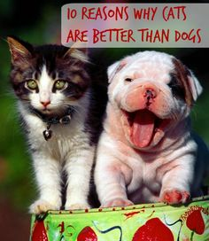 While the cat versus dog debate rages on, if you're a cat lover you have to agree that cats are better than dogs! | 10 Reasons Why Cats Are Better Than Dogs