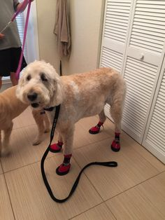Max has hip dysplasia and arthritis is his back and rear legs. Lately he has been shuffling his feet when he walks and has been grinding down his nails until they bleed. I found these shoes and read the reviews and found that there are many dogs with the same issue as Max and these shoes have helped.