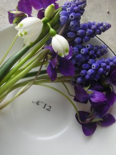 Early spring flowers: Violets, Grape Hyacinth & Snowdrops