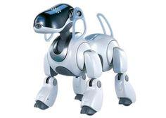 Siete años después de que se dejara de fabricar el mítico Aibo, el perro robot que la compañía japonesa Sony lanzó en 1999, se ve abocado al apagón tecnológico por la falta de piezas de repuesto y de personas capaces de repararlos.  Ver más en: http://www.20minutos.es/noticia/2297088/0/aibo-sony/perro-robot/apagon-tecnologico/#xtor=AD-15&xts=467263 http://www.20minutos.es/noticia/2297088/0/aibo-sony/perro-robot/apagon-tecnologico/