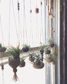 auraria crocheted air plant hangers / Magic Garden <3