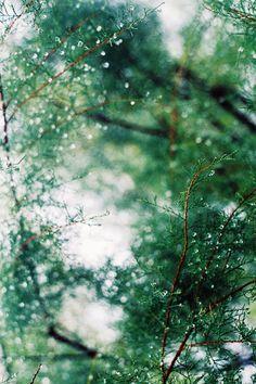 rain, rain, rain (by lorena*arance (busy, busy))