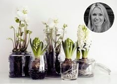 Spring decor with mini onion flower garden in a glass jar - cool-floral-decoration-white-with-onion-flowers-in-jars - Onion Flower, Christmas Flowers, Winter Flowers, Spring Flowers, Winter Plants, Winter Garden, Deco Floral, Spring Bulbs, Weekend Projects
