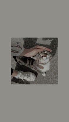 The cats are cute and cool♥️♥️♥️😍 Cartoon Wallpaper, Tier Wallpaper, Cute Cat Wallpaper, Mood Wallpaper, Homescreen Wallpaper, Iphone Background Wallpaper, Cute Disney Wallpaper, Aesthetic Pastel Wallpaper, Locked Wallpaper