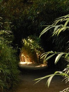 Exploring Golden Door gardens, a guest walks through the lush bamboo groves. Bamboo, which grows wild in Japan, is thought of as a lucky plant, since it is so difficult to destroy. On a symbolic level, this marvelous, versatile evergreen means constancy and devotion.