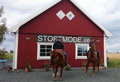 Hästar med ryttare på besök hos STORTMODE på Visingsö.